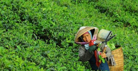 modern slavery in the tea industry