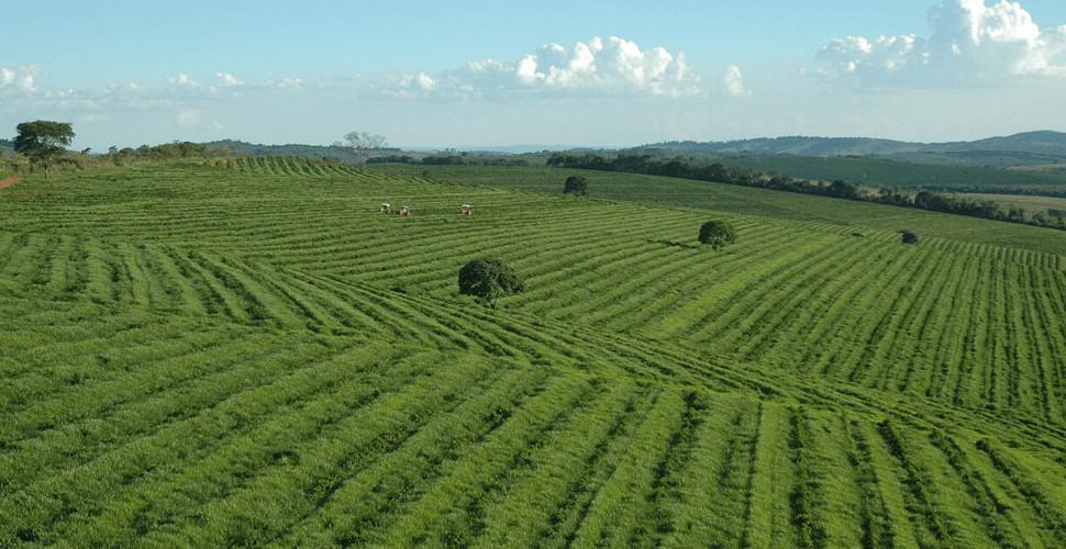 brazil minas gerais coffee plantation