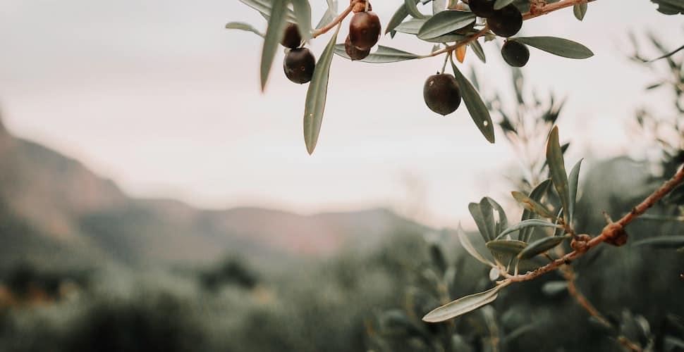 Sicily farm