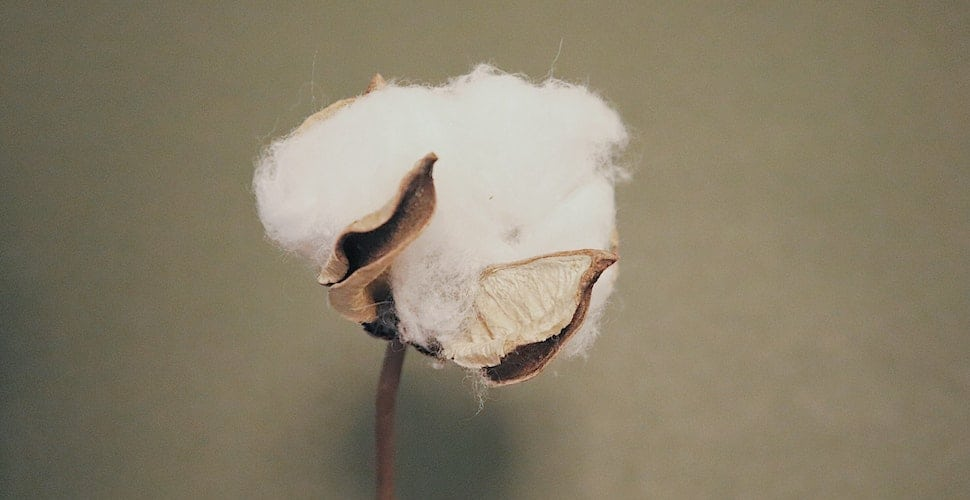 Cotton bud