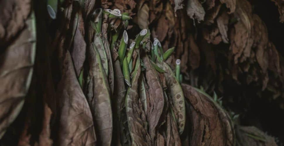 Brazilian government takes landmark action against tobacco exporter
