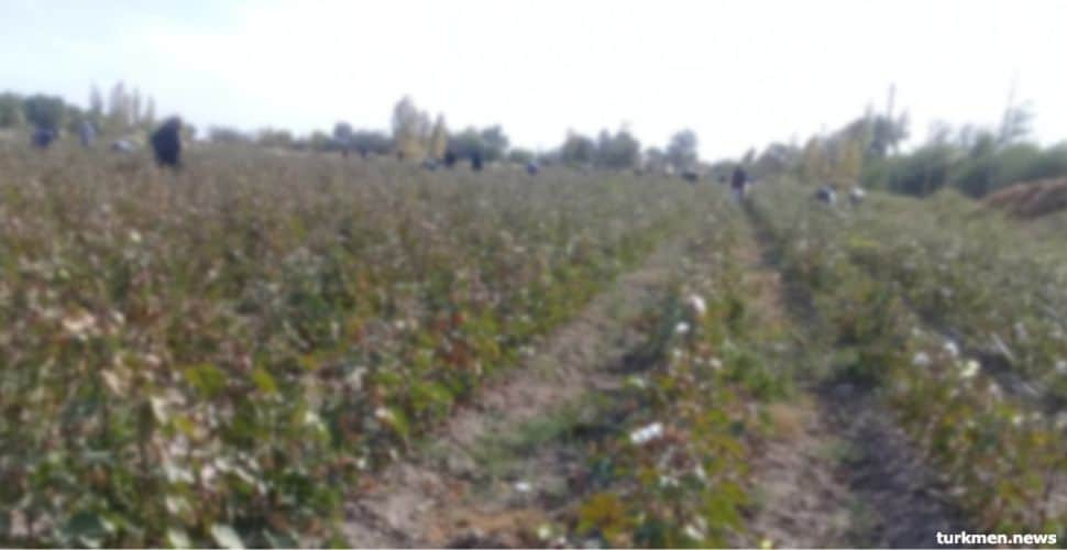 Joint Civil Society Monitoring Finds Systemic Forced Labor in Turkmen Cotton Harvest