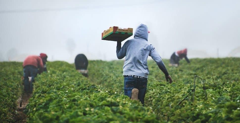 farmworker