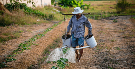 Indian farm worker escapes after 6 years of abuse in Southern Italy