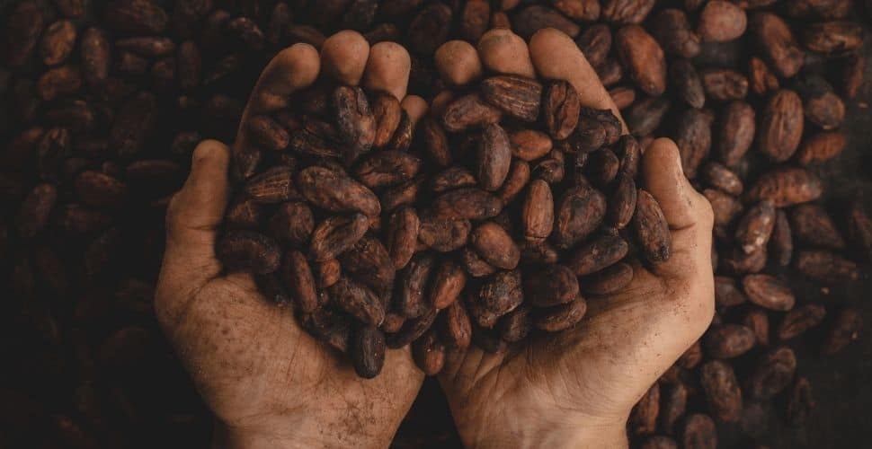 Cocoa company admits it can't trace its suppliers