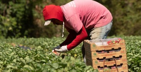 Trafficking in U.S. agriculture worsened over the pandemic